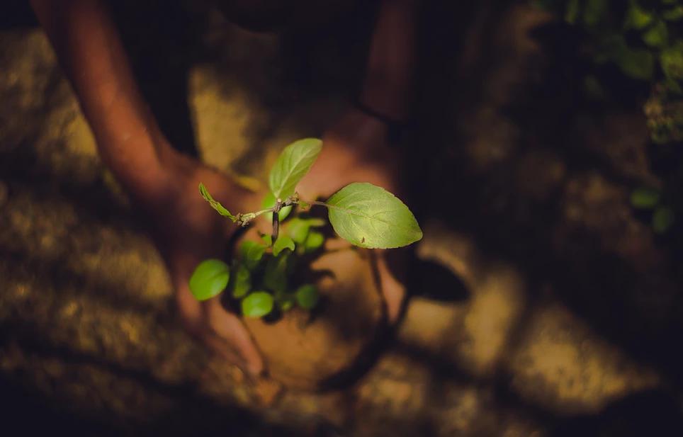 Nourishing Earth Element Yoga Practice