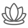 lotus, therapy, meditation, relax